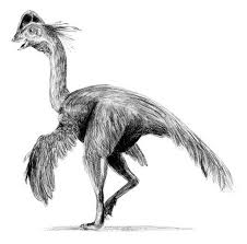 le-dinosaure-a-plumes-anzu-wyliei