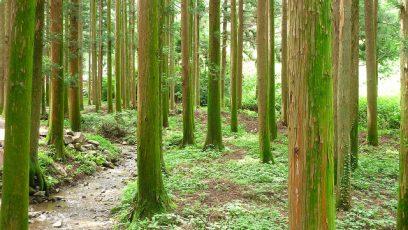 Réchauffement climatique : les gaz à effet de serre et le rôle des forêts